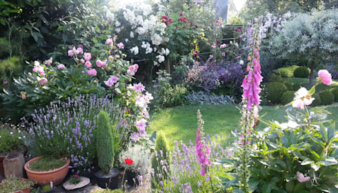 my cheshire garden foxgloves and roses caroline benedict smith garden design cheshire classic - Garden Design Cheshire