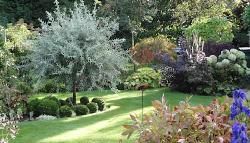 my cheshire garden autumn silver pear caroline benedict smith garden design cheshire classic - Garden Design Cheshire