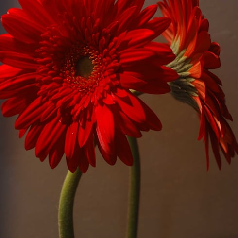 Flower detail: modern Bathroom by Ininside