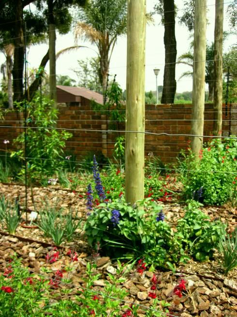 Large Family Garden:  Garage/shed by Young Landscape Design Studio