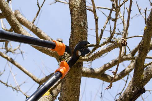 Tree Trimming:   by Johannesburg Tree Felling