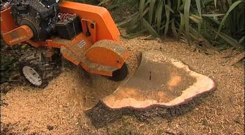 Stump Removal:   by Johannesburg Tree Felling