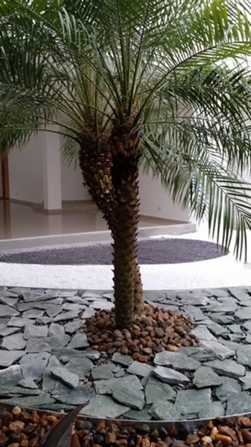 EDIFICIO MIRADOR DE SAN PEDRO – SANTA MARTA/MAGDALENA – COLOMBIA: Jardines de estilo tropical por BRASSICA SOLUCIONES PAISAJISTICAS S.A.S.