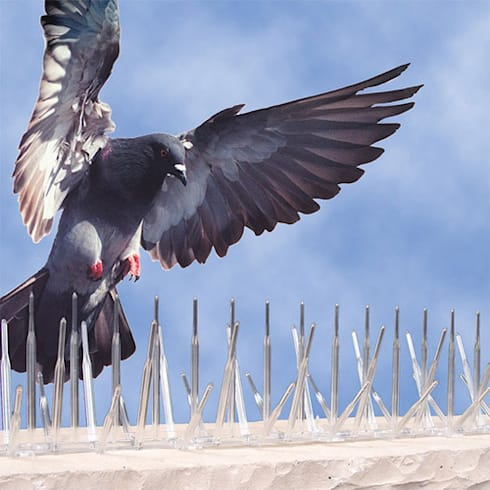 Reliable Bird Proofing:   by Pest Control Durban