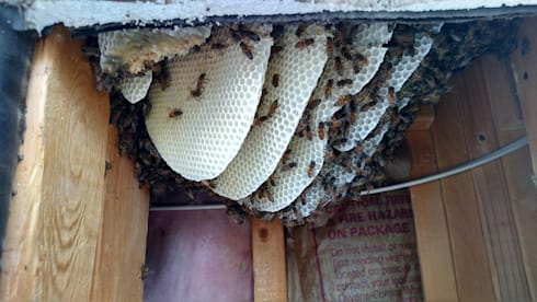 Bee Removal:   by Pest Control Durban