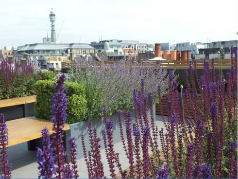 Ganton Street Roof Terrace:  Commercial Spaces by Aralia