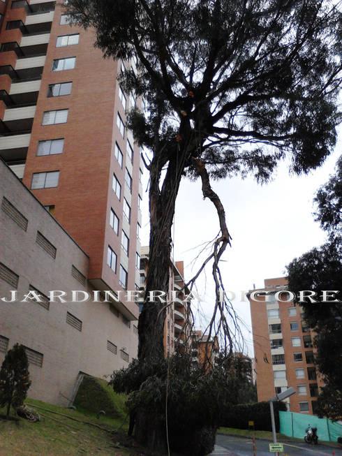 TALA Y PODA DE ARBOLES, BLOQUEO Y TRASLADO DE ARBOLES:  de estilo  por JARDINERÍA & SERVICIOS DIGORE S.A.S