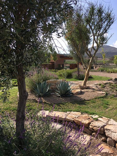 Jardines de acceso al fraccionamiento: Jardines de estilo  por Hábitas