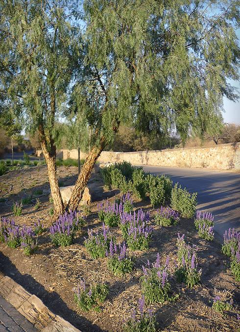 Salvias azules: Jardines de estilo  por Hábitas