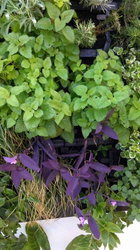 Detalle. Jardin Vertical con Substrato.: Jardines de estilo moderno de GreenerLand. Arquitectura Paisajista y Tematización