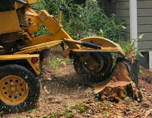 Stump Removal Services:   by Cape Town Tree Felling