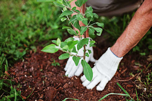 Tree Planting and Replacement:   by Cape Town Tree Felling