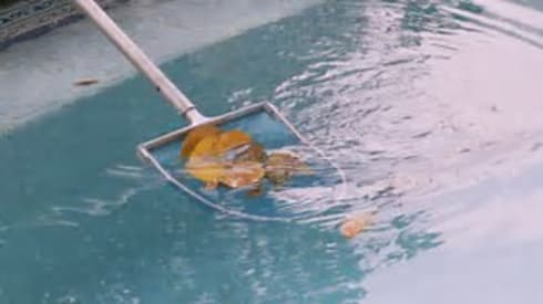 Pool cleaning services:   by Garden Services Johannesburg