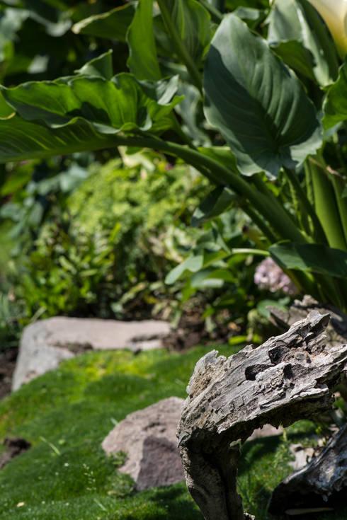 Garden by Mexikan Curious