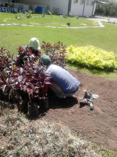 Plantas para jardín: Jardines con piedras de estilo  por Vida Verde