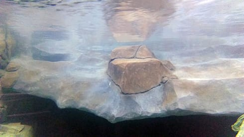 Vista bajo el agua, rampa roca artificial: Museos de estilo  de GreenerLand. Arquitectura Paisajista y Tematización