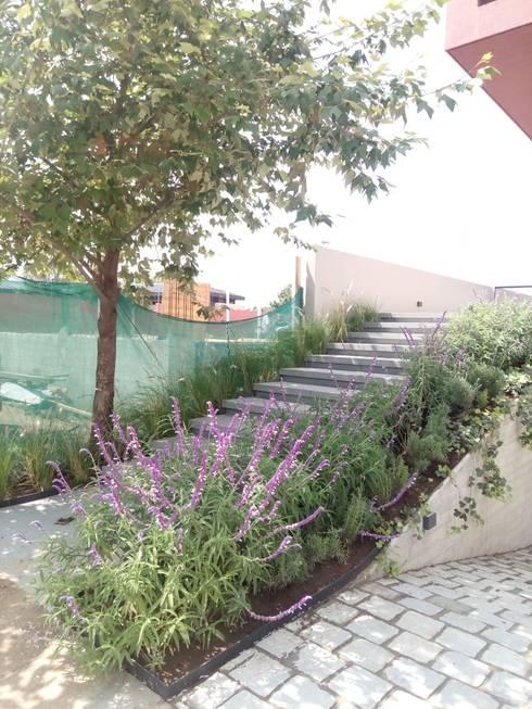 Ingreso: Jardines en la fachada de estilo  por Verde Lavanda