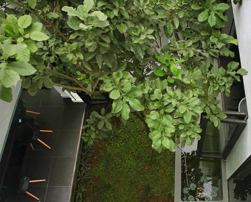 Ấn tượng độc đáo nhất của ngôi nhà được thể hiện ở không gian xanh.:  Hiên, sân thượng by Công ty TNHH Thiết Kế Xây Dựng Song Phát