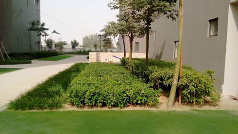 different planting patterns: modern Garden by NMP Design