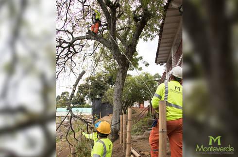 Poda de árboles:  de estilo  por Monteverde Ltda