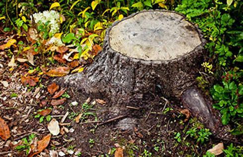Tree Felling Pretoria:   by Tree Felling Pretoria