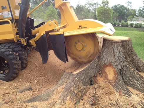 Professional Stump Removal Solutions:   by Tree Fellers Pretoria