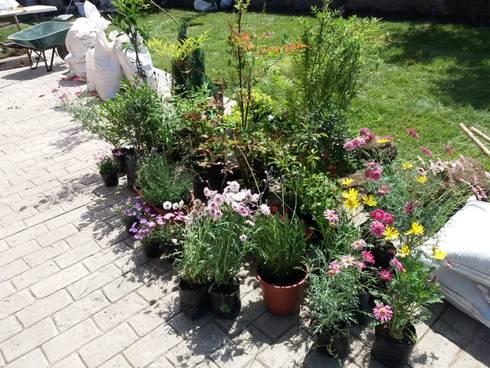 Algunas Plantas lista para su plantación: Antejardines de estilo  por Deck and Garden