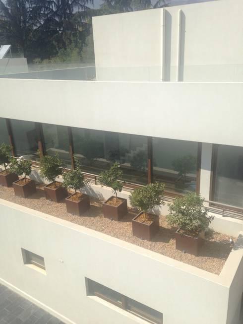 Quiebra vista vegetal: Terrazas  de estilo  por Bächler Paisajismo