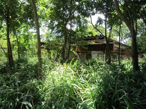 House in the Bush:  Front yard by Van der Merwe Miszewski Architects