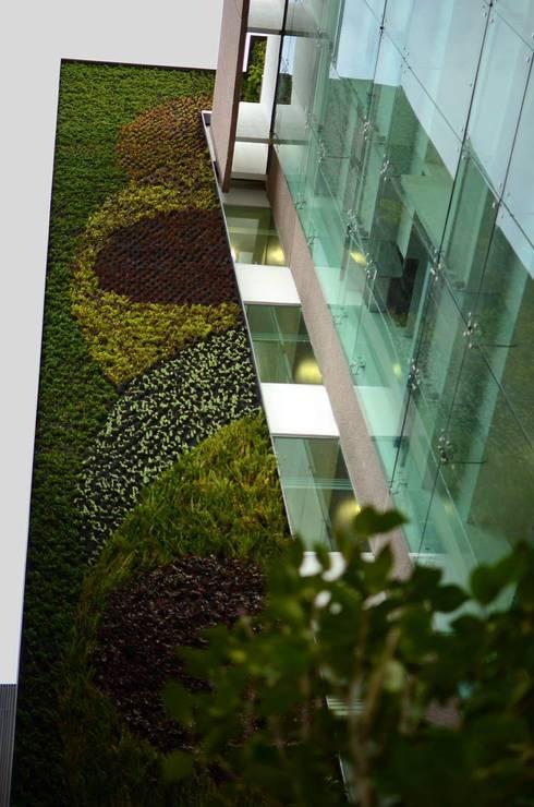 Muros verdes San Angel: Espacios comerciales de estilo  por Designo Arquitectos