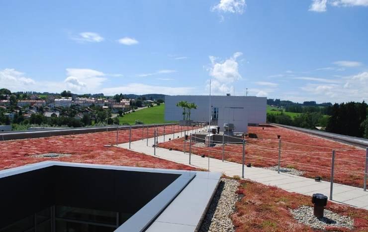 Dachser Kempten:  Terrasse von Optigrün international AG