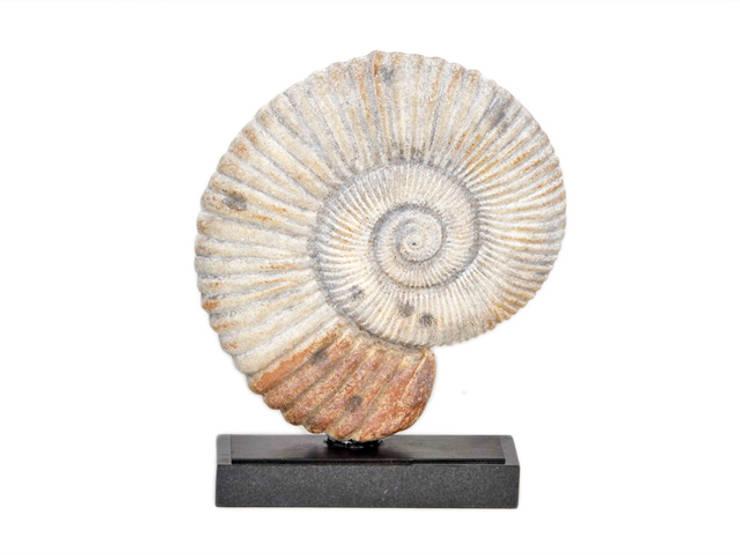 """Arteriors Decorationsobjekt """"Fossil"""":  Badezimmer von Sweets & Spices Dekoration und Möbel"""