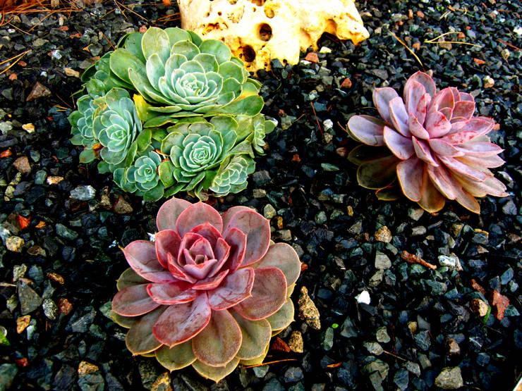 Castelldefels-Aragó: Jardines de estilo  de Simbiosi Estudi