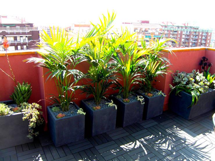 Garten von Simbiosi Estudi