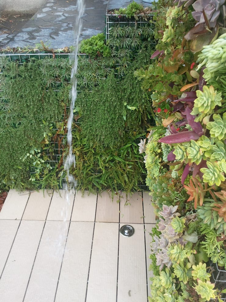 DUCHA VEGETAL: Jardines de estilo  de PhytoKinetic S.L.