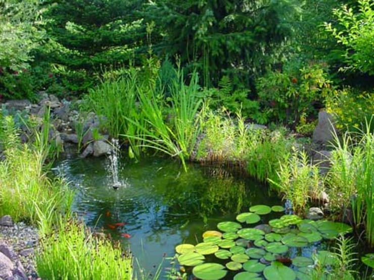 aquariumpflanzen.netが手掛けた庭