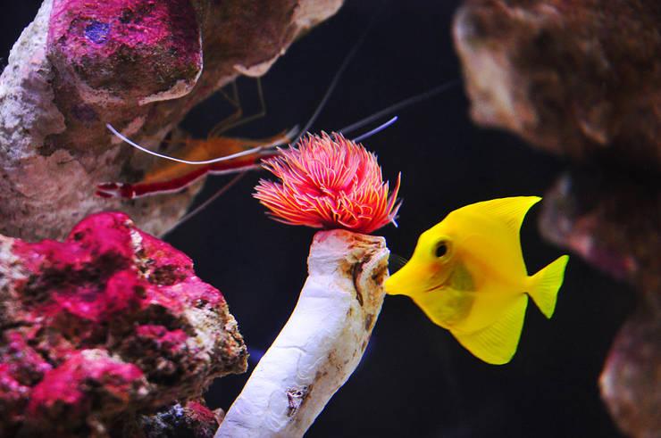 Aquarium in the city:  Living room by Aquarium Architecture