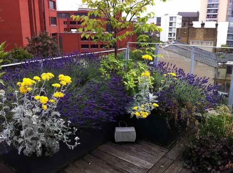 Jardins industriais por Cool Gardens Landscaping
