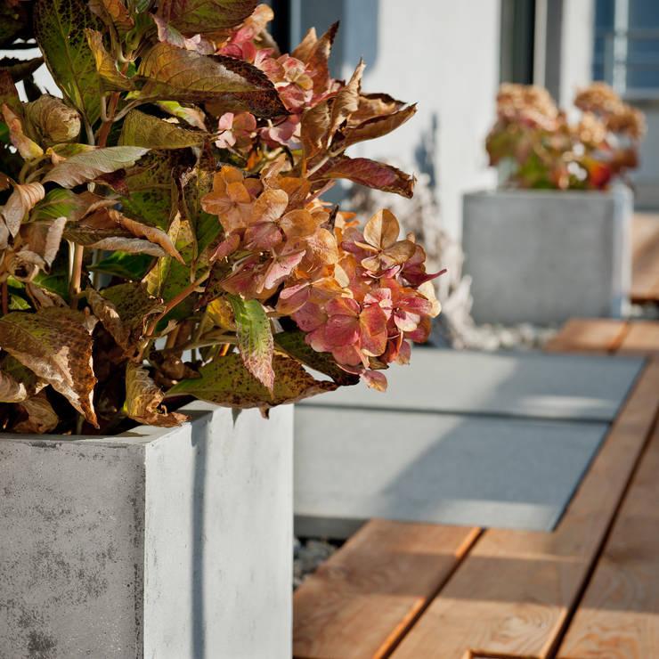 Projekty,  Ogród zaprojektowane przez plantershop