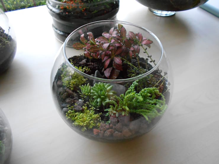 Terrariums:   by Ece Botanik