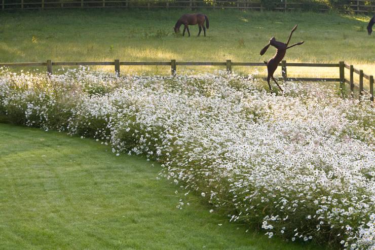 Wild modernist landscape garden:   by Catherine Thomas Landscape & Garden Design Ltd