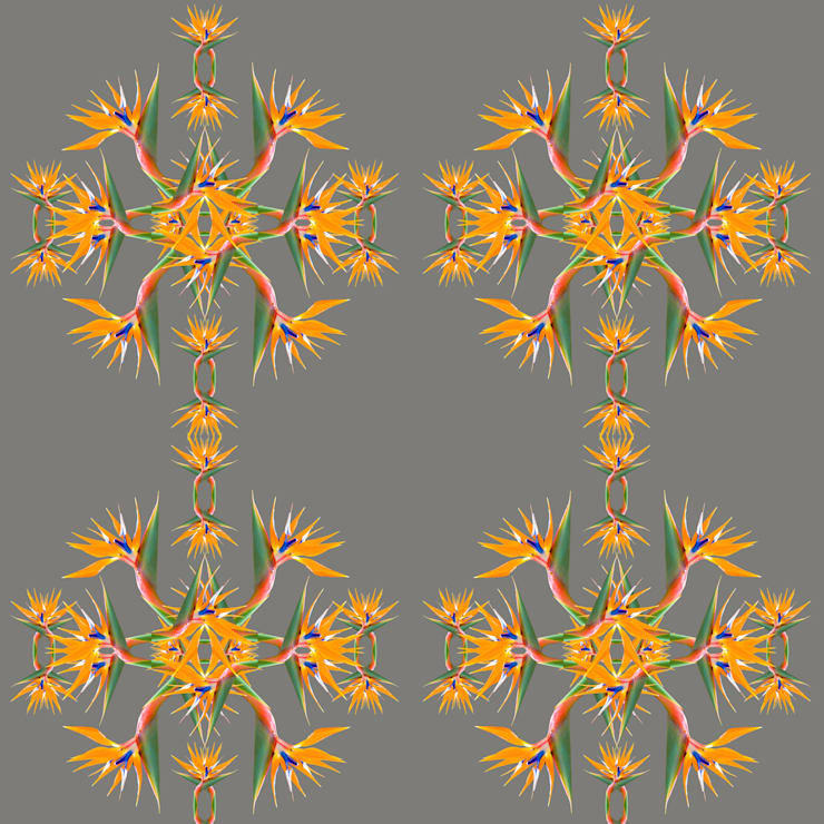 Bird of Paradise Wallpaper:  Walls & flooring by Lomas & Lomas