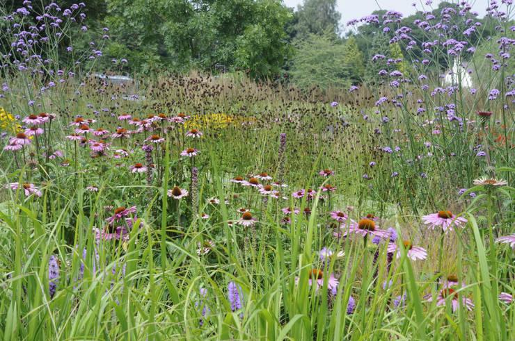Surrey contemporary country garden:  Garden by Arthur Road Landscapes