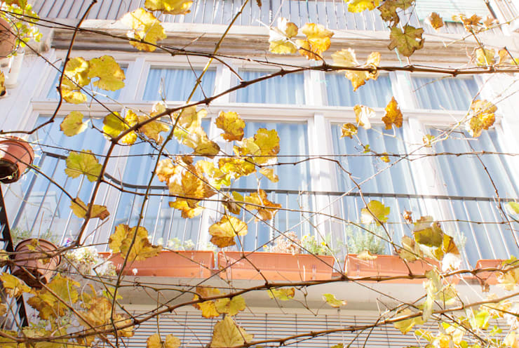 fachada galeria desde el patio: Jardines de estilo  de PARRAMON + TAHULL arquitectes