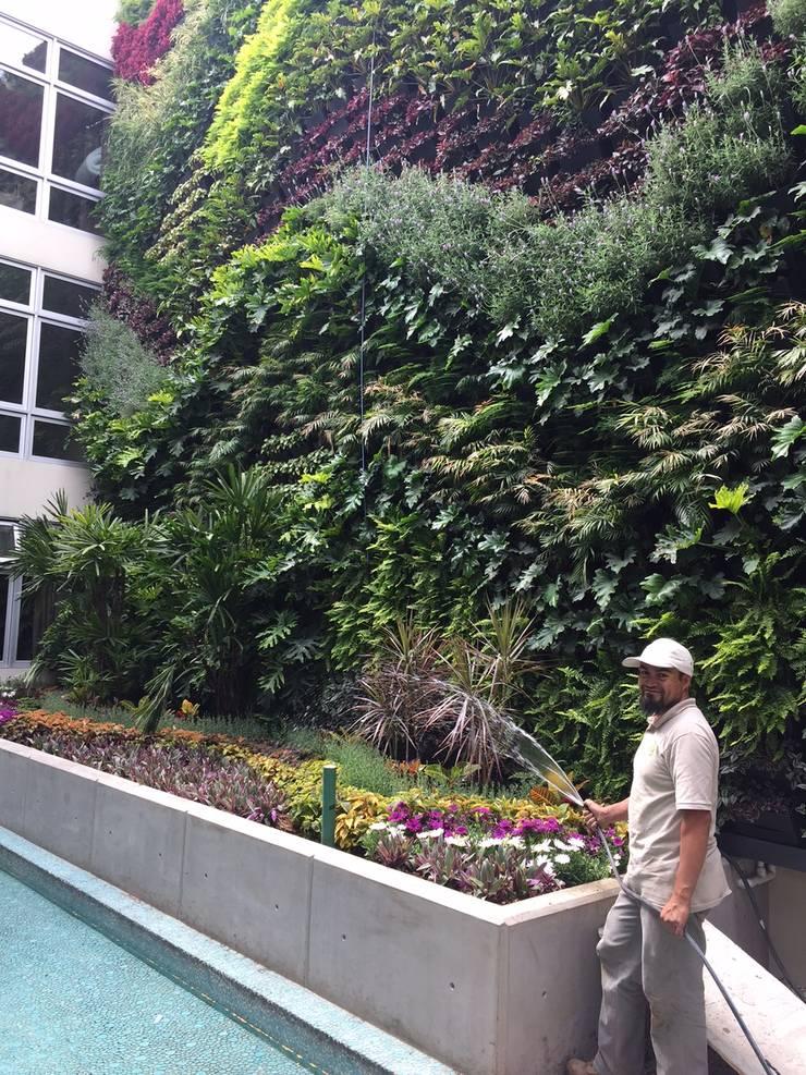 Muro Verde San Ángel Jardines modernos de Regenera Mx - Fábrica Ecológica Moderno
