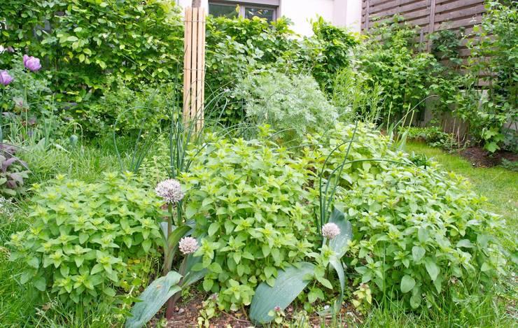 Familien- und Gemeinschaftsgarten:  Garten von Nelka,