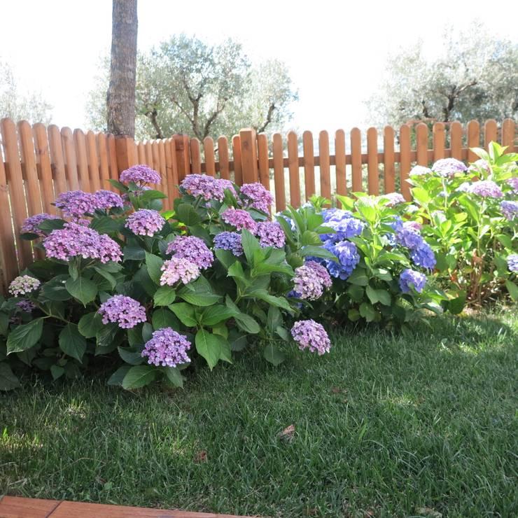 Jardines de estilo moderno por alessia brignardello