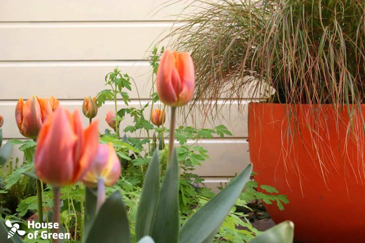 Voorjaar in de winkeltuin:  Tuin door House of Green, Modern