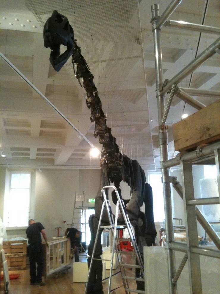 Rutland Dinosaur:   by DesignRealisation