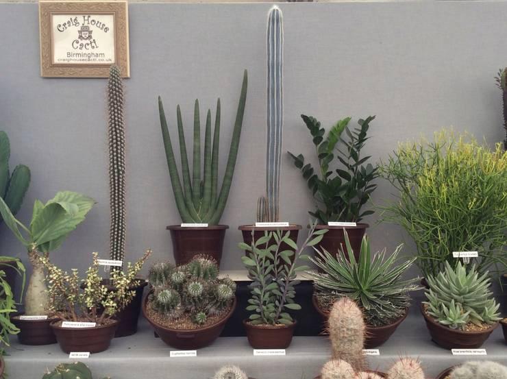Jardines de estilo  por Craig House Cacti